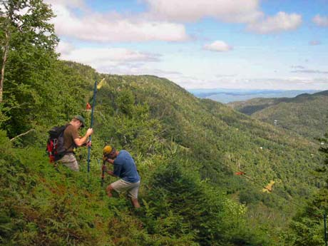 Maintaining regeneration zones for new trail trees at Mad River Glen, Vermont 8/22/04